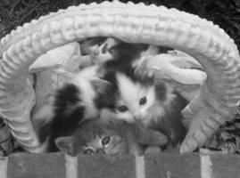 Kittens by Rhimey