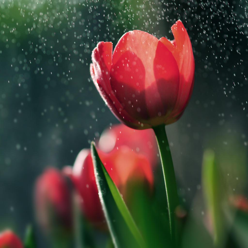 Sunny rain by JunJun510