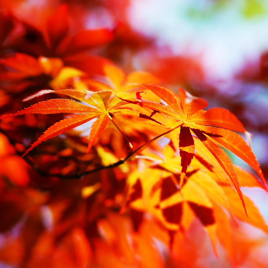 Summer red leaves by JunJun510