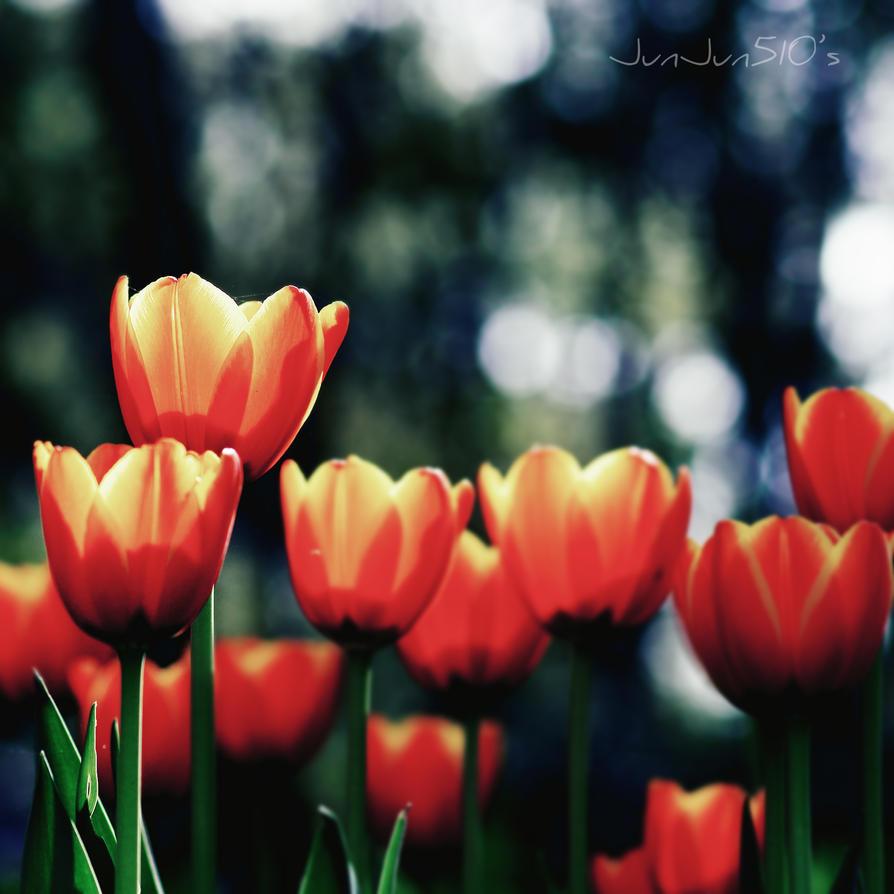 Burning tulips by JunJun510
