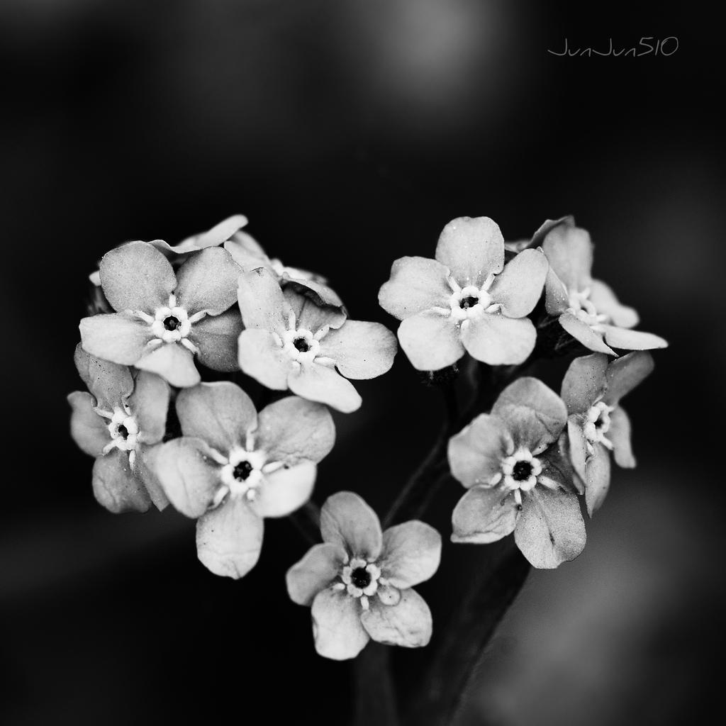 Forget me not by JunJun510