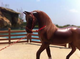 Arabian Halter by Appaloosa0313