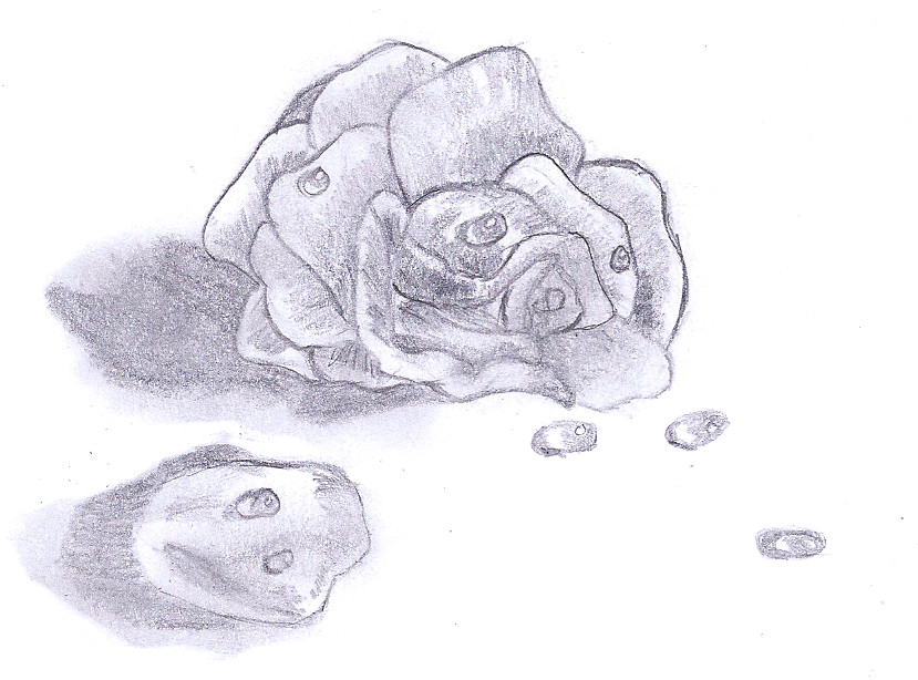 Water Drop Rose by xxW...