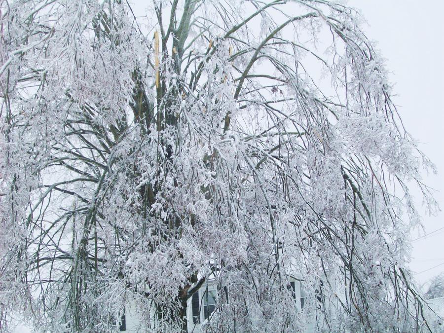 Winter Storm 004 by PhantomFlowers