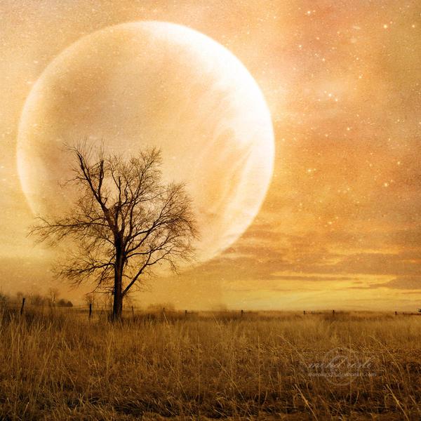 +Sunset Dream+