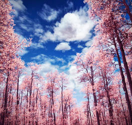 +Pink Wood+ by moroka323