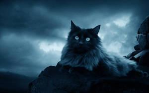 .:The Black Cat:. by moroka323