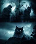 +Portrait of a Cat+
