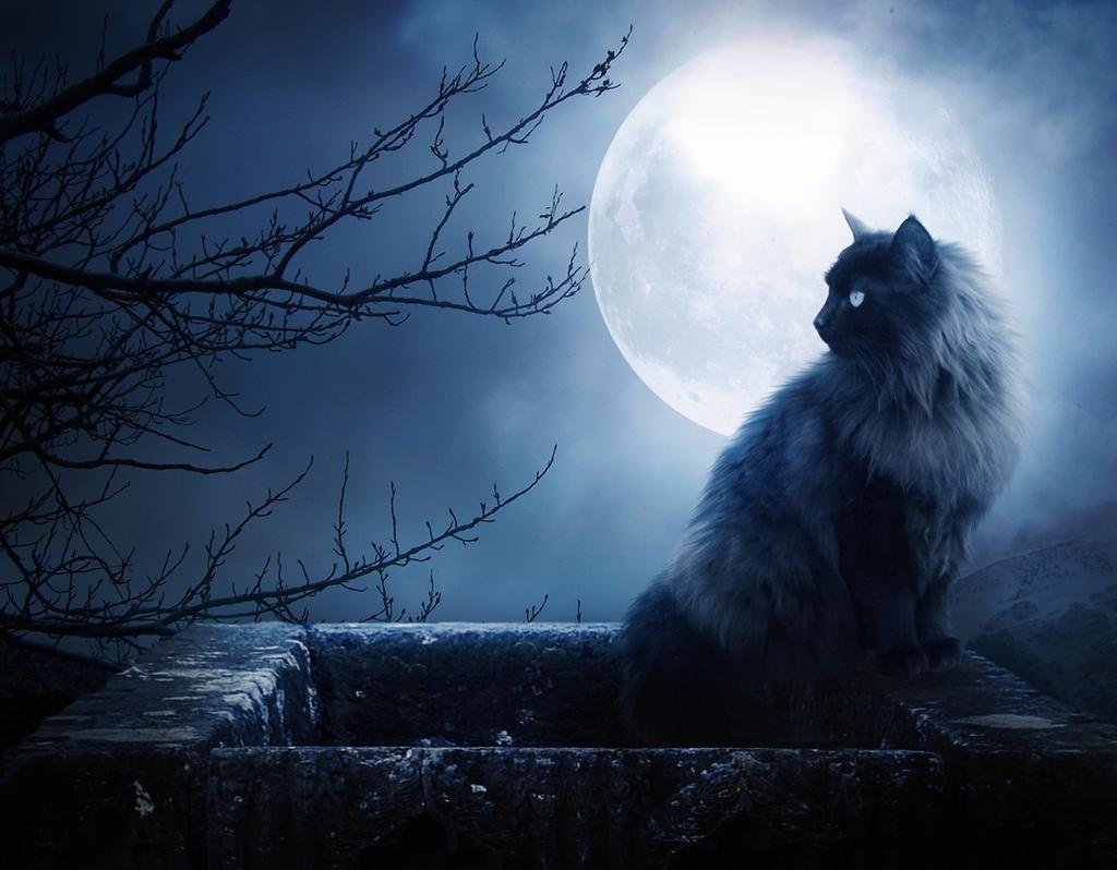 .:Full Moon:. by moroka323