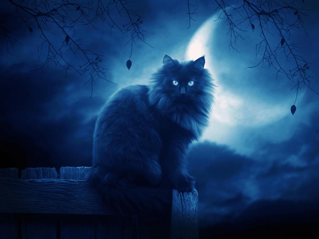 Most Inspiring Wallpaper Cat Mystical - __the_black_cat_ii___by_moroka323  Gallery_41416 .jpg