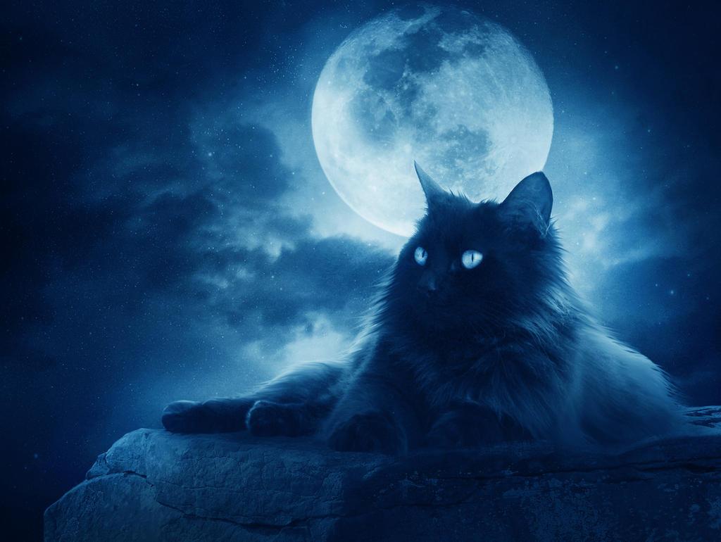 .:Midnight Wishes:. by moroka323