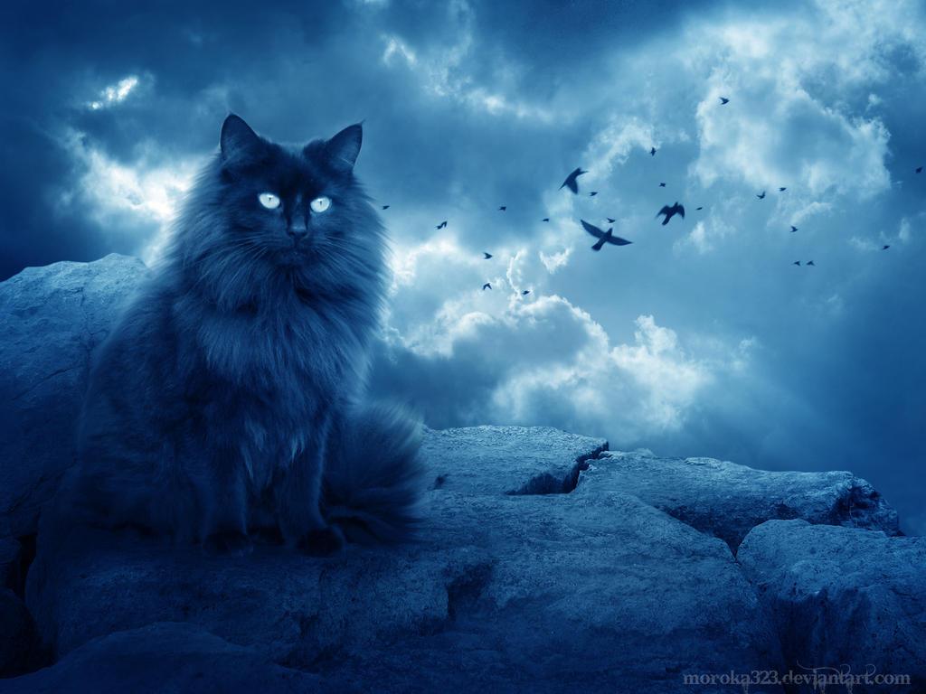 Картинки по запросу лунный кот