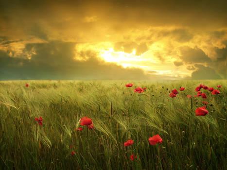 Fields of hope