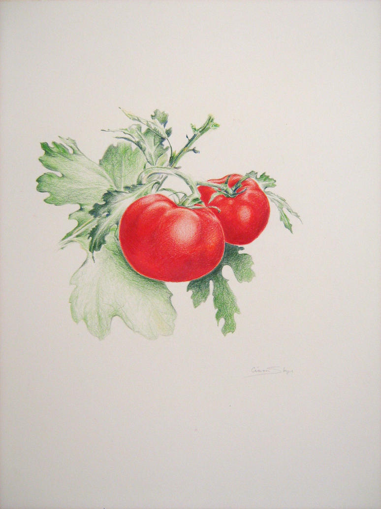 Tomatoes by violinsane