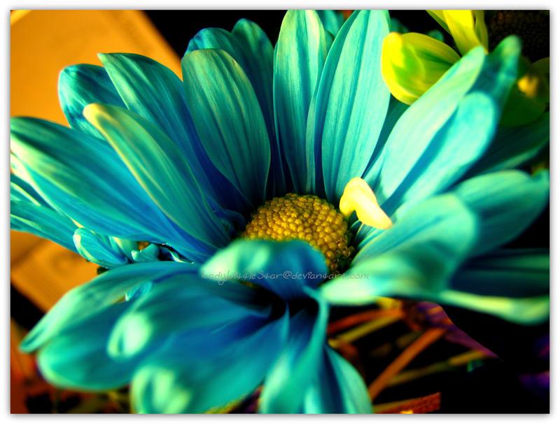 Feeling Blue... by LadyLittleStar