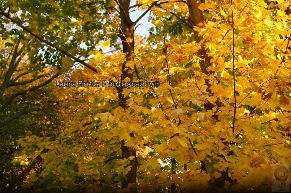 Fall by LauraBrittaPhoto