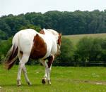 STOCK - Horse