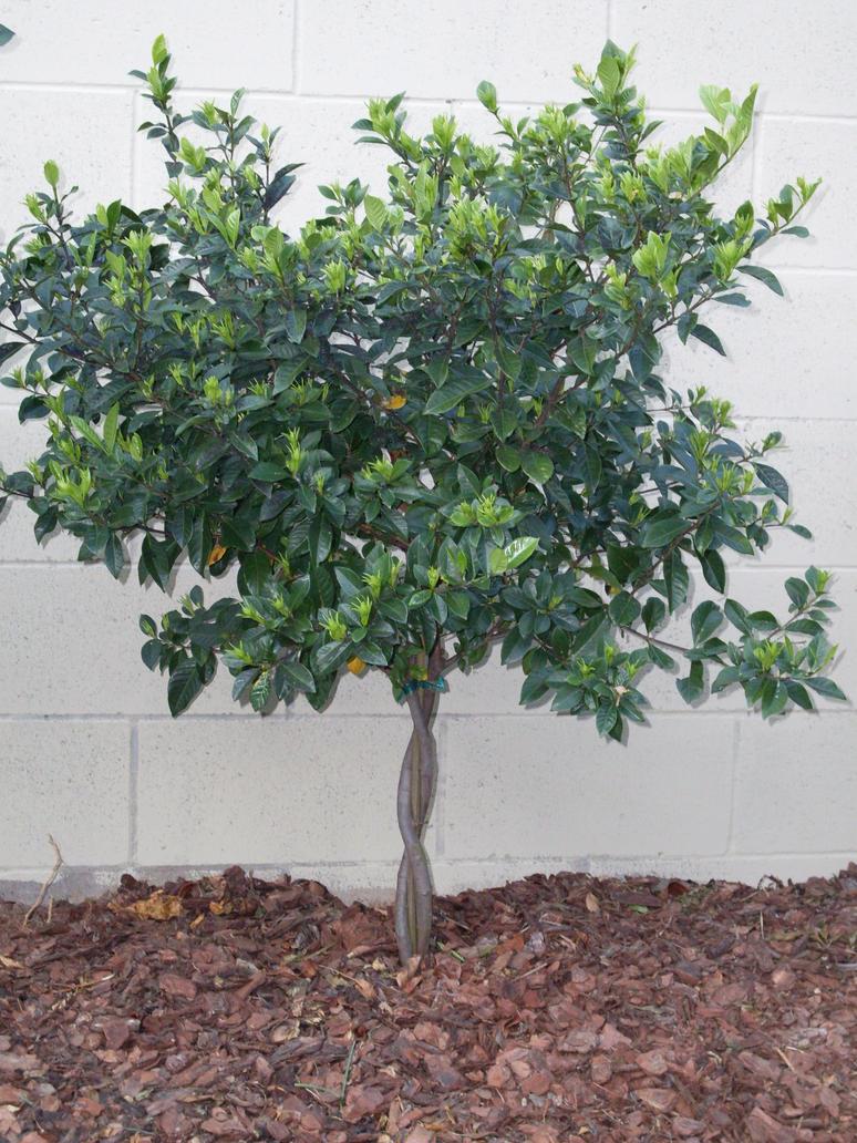 Small tree stock 2 by erraticstudios on deviantart for Short trees