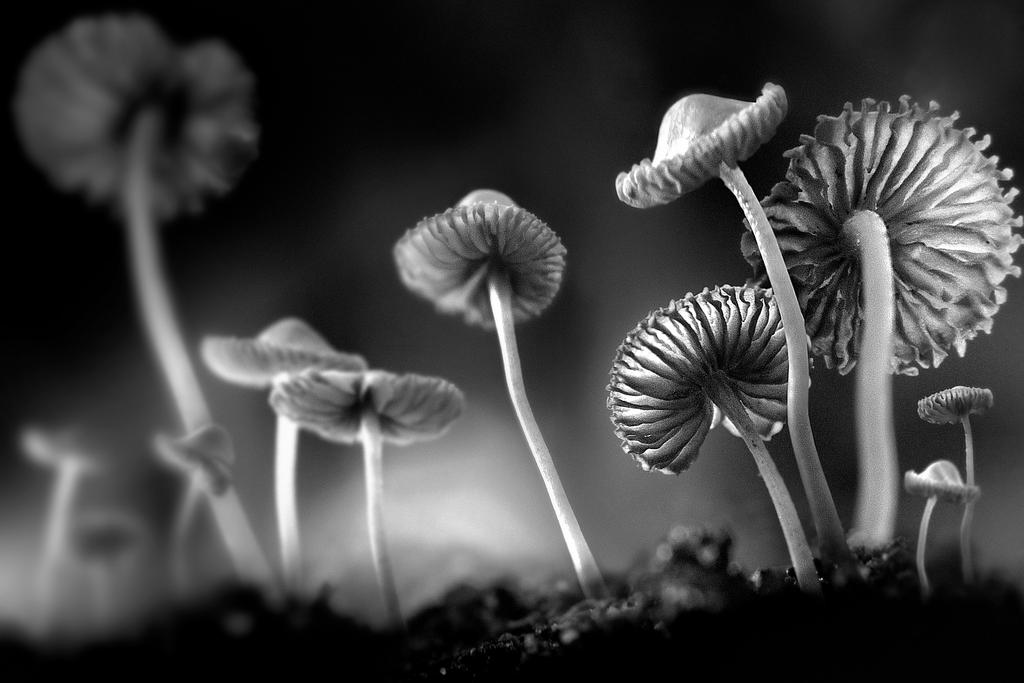 Mushroom Paradise by SAMLIM