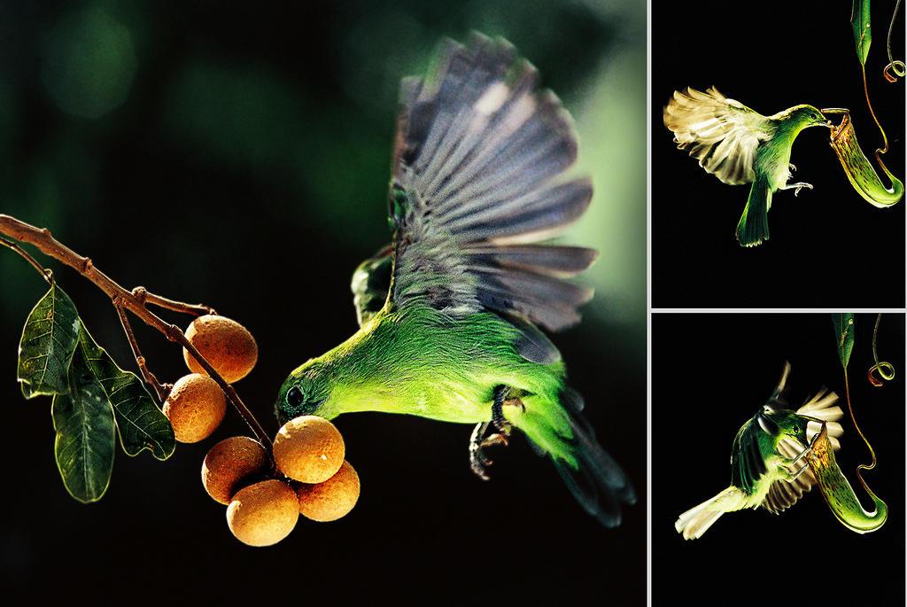 Early Bird by SAMLIM