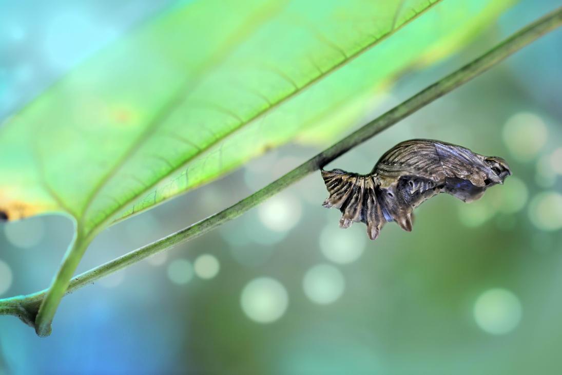 Journey Of A Butterfly by SAMLIM