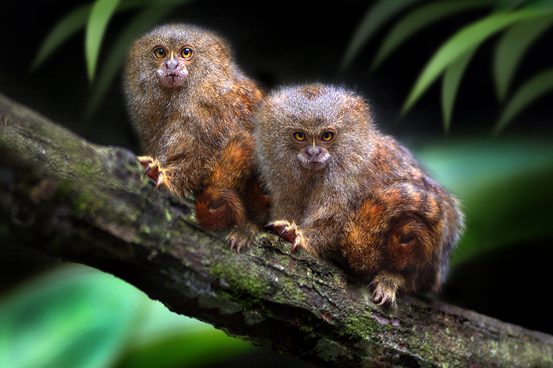 cute pair by SAMLIM