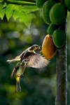 Papaya Breakfast by SAMLIM