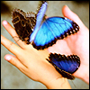 Avatar-papillon-3 by SueJO