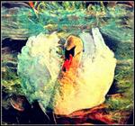 Ruffled-Feathers