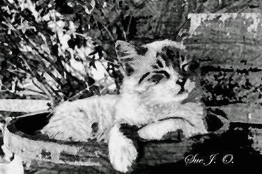 A-Kitten-for-Kitty by SueJO