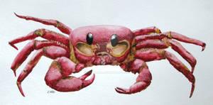 Red Spirit Crab