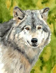 The Wolf by RamonaQ