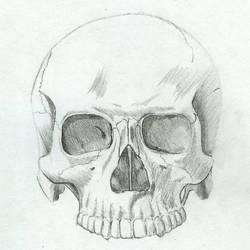 Anatomy Study: Skull by Master-Futon