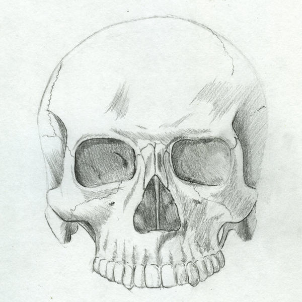 Anatomy Study: Skull by Master-Futon on DeviantArt