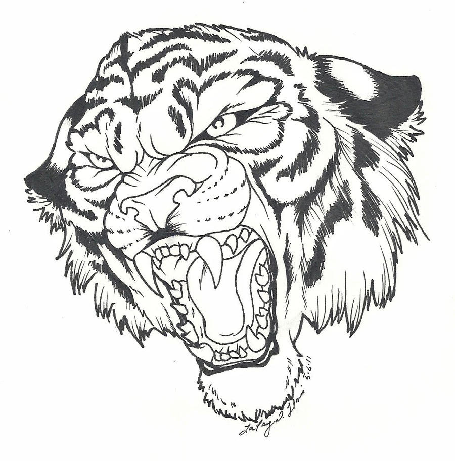 It's just a graphic of Magic Roaring Tiger Drawing