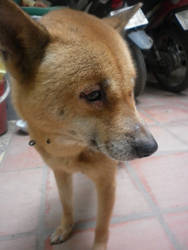 Tun.My dog by Berrya