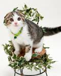 My Cat Sean 1