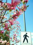 --Crosswalk