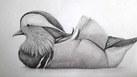 Mandarin duck by LauriieT