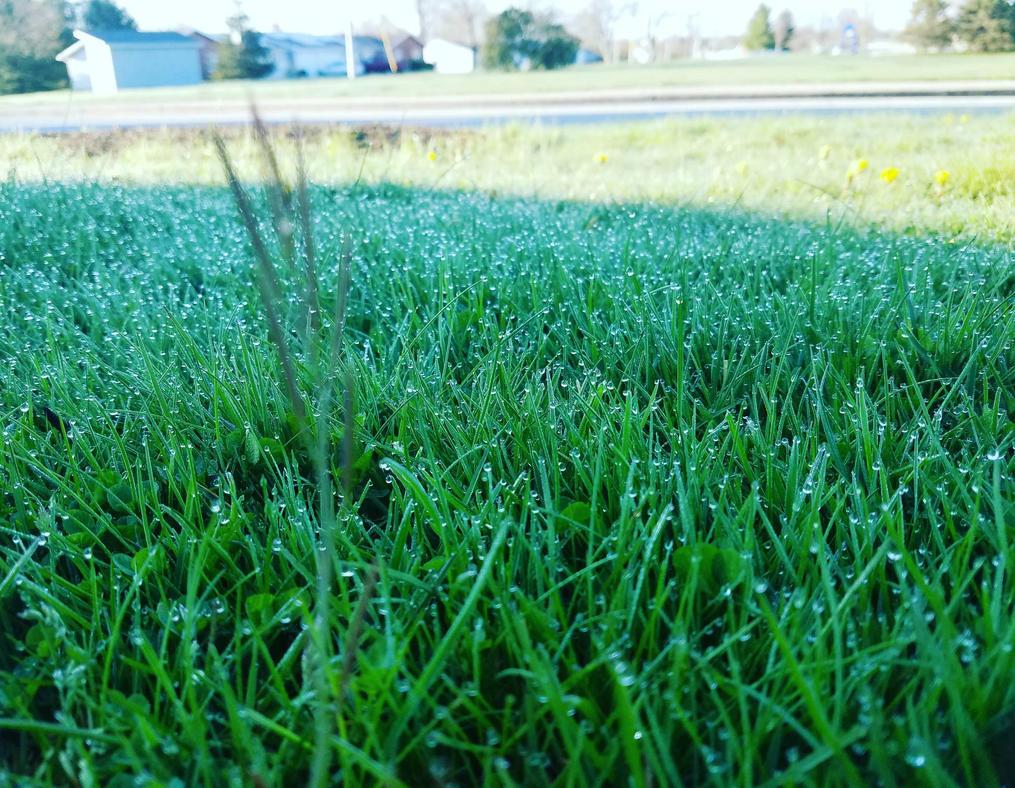 Grass by SparkySkyrider