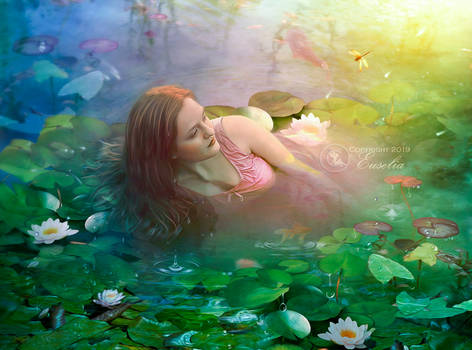 In-a-bed-of-water-lilies
