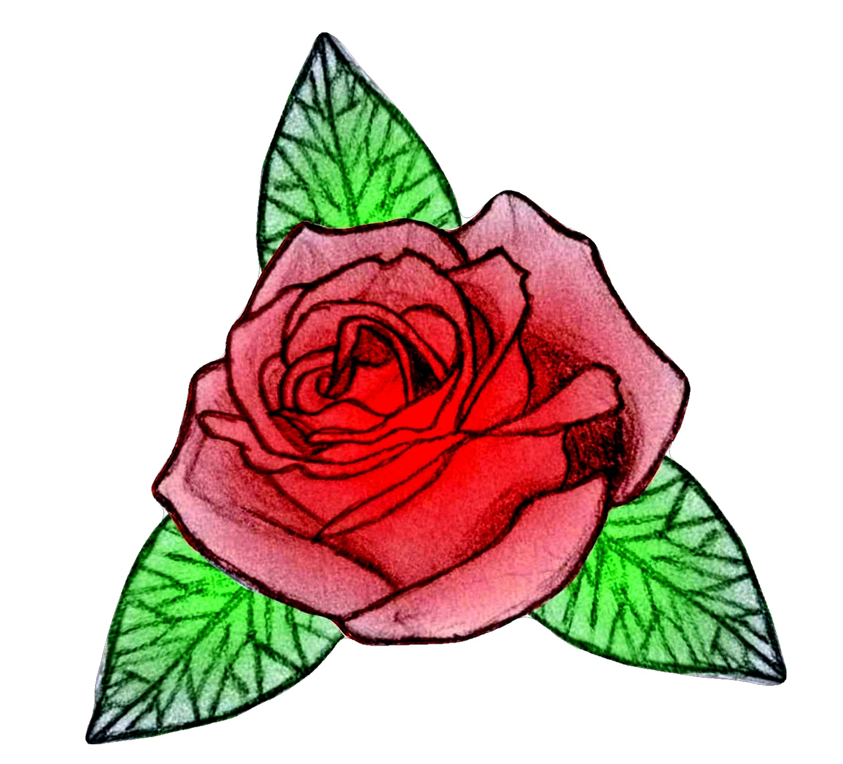 Hand-drawn Rose... by Fluffytheartist on DeviantArt