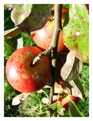 Autumn Jewel by Alcamin
