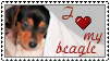 Beagle Stamp I - Seremela05 by stamps-club