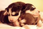 Maya's puppies