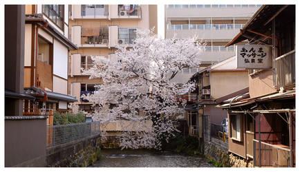 Hidden in the Corner by miharashi
