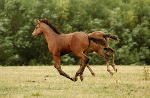 Foal Stock 08 by candigal
