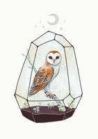 Barn Owl by freeminds
