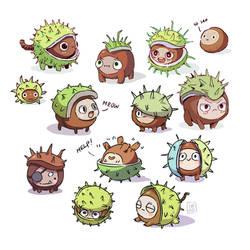 Little chestnut