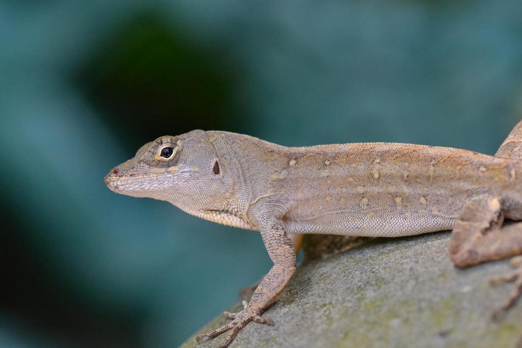 A Lizard by Autumnais